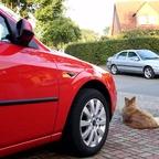 Mondeo MK1 und MK3